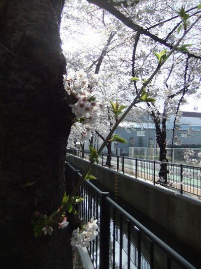 20140402fuji_013