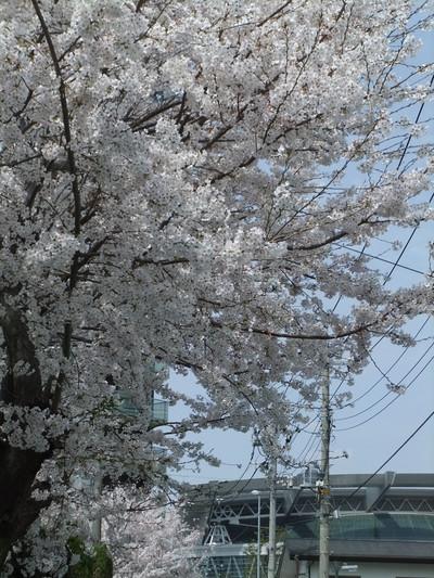 20140402fuji_030