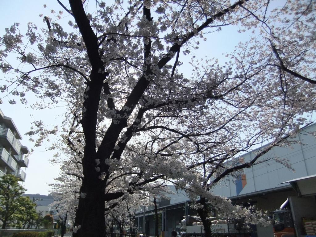 20140402fuji_003