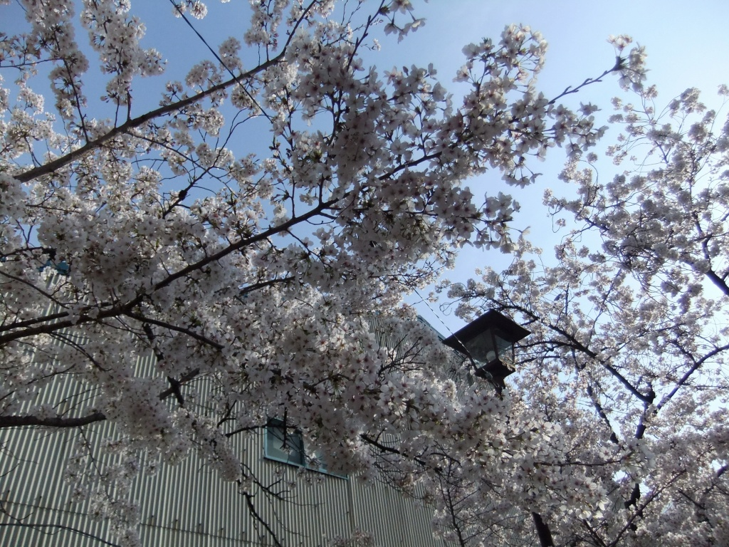 20140402fuji_015